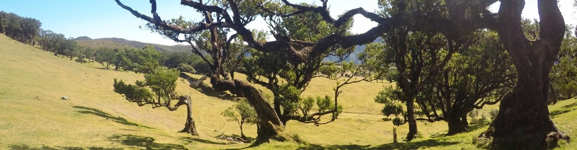Natureza da Ilha da Madeira