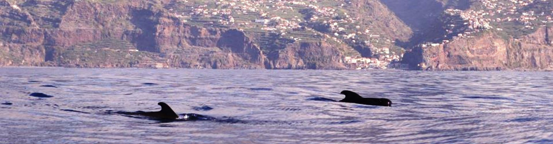 Private Calheta Dolphin Tour (4)