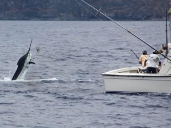 Big Game Madeira Sportfishing Shared Boat