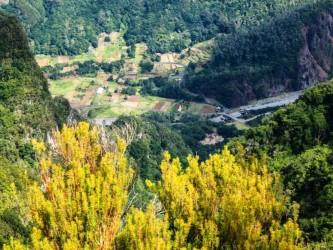 Chão dos Ribeira Trail Tour Médio na Madeira