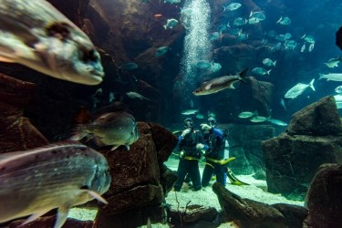 Diving experience in Madeira Aquarium Porto Moniz