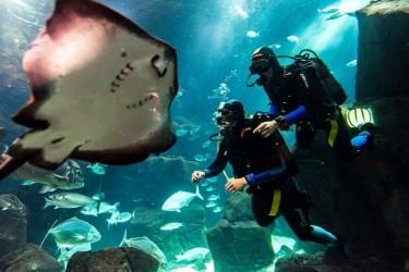 Diving experience in Madeira Aquarium Porto Moniz