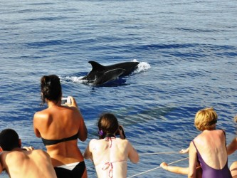 Dolphin and Whale Watching Tour Guaranteed Sighting in Madeira