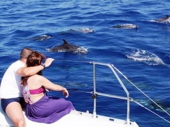 Passeio de Catamarã com Avistamento de Cetáceos Garantido no Funchal