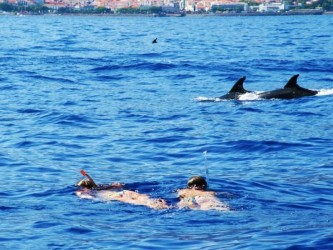 Dolphin and Whale Watching in Madeira Island Tour Boat