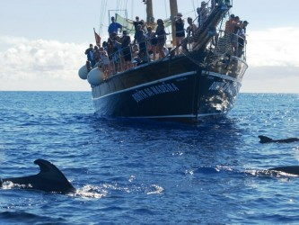 Dolphins & Whales Boat Trip from Funchal, Madeira