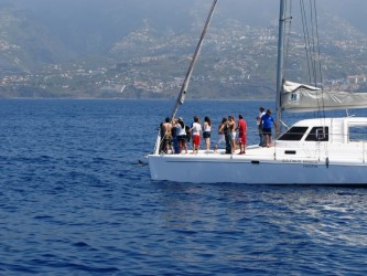 Funchal Madeira Dolphins Morning Trips