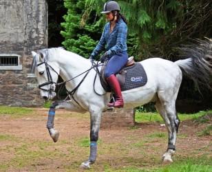 Experiência Pony na Ilha da Madeira