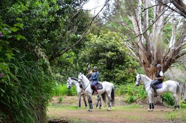 Levada da Serra Horse Riding Trail in Madeira