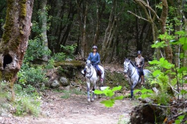 Pico do Suna Horse Riding Trail in Madeira Island