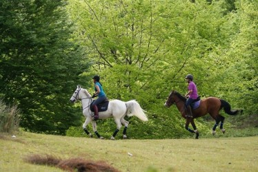 Forest Trail Horse Riding in Madeira Island