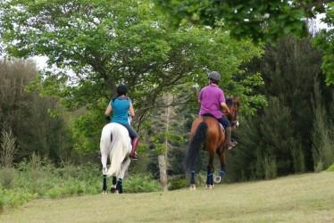 Trilho a Cavalo na Floresta na Madeira