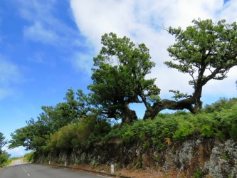 Enchanted terraces - Full day Jeep Tour in Madeira Island