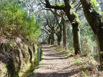 Levada da Serra do Faial Walk in Camacha, Madeira