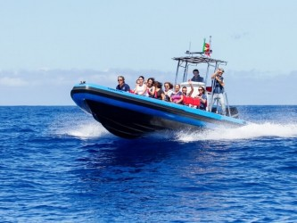 Madeira Dolphin Watching on Speed Boat Tour