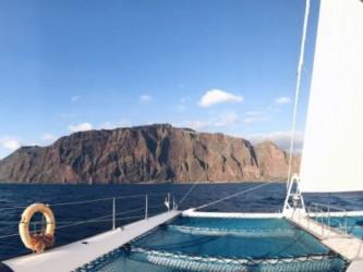 Madeira Dolphins & Whales Catamaran Trips
