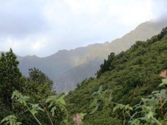 Madeira Laurissilva Rainforest Tour
