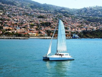 Magic Dolphin Afternoon Trips in Funchal, Madeira