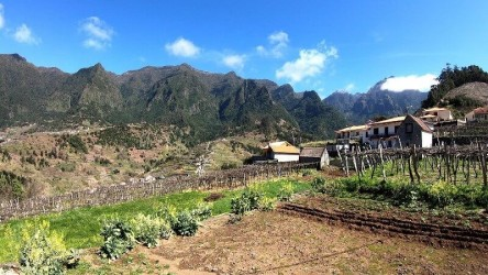 Nature & Wine Experience in Madeira Jeep tour  wine tasting