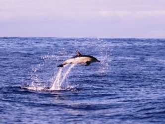 Private Calheta Dolphin Tour