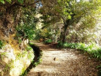 Private Walks Near Funchal