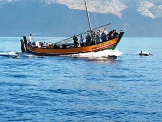 Ribeira Brava Observação de Baleias Tour desde a Calheta, Madeira