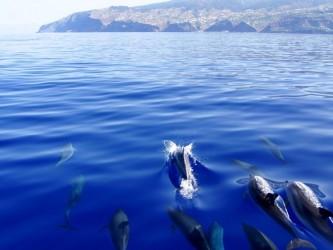 Ribeira Brava whale watching tour from Calheta, Madeira