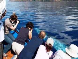 Ribeira Brava Whale watching tour