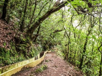 Ribeiro Frio Easy Trail Tour in Madeira Island