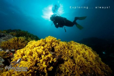 Scuba Diving in Madeira Island