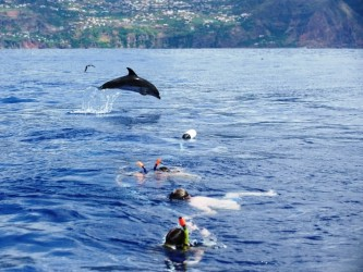 Snorkeling with dolphins in Madeira Island