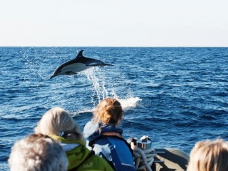 Stenella whale watching tour from Calheta, Madeira