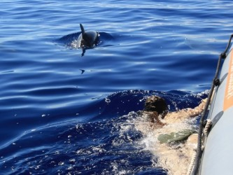Swimming with Dolphins in Madeira Island