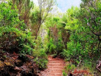 Lagoa do Vento - The Lakes of Madeira Walk in Madeira Island