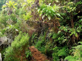 Lagoa do Vento - The Lakes of Madeira Walk