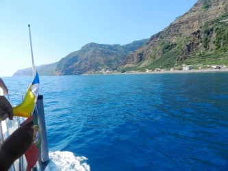 Whales & Dolphins Watching Tour from Calheta