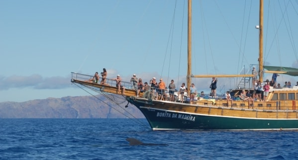 boat tours in madeira island min