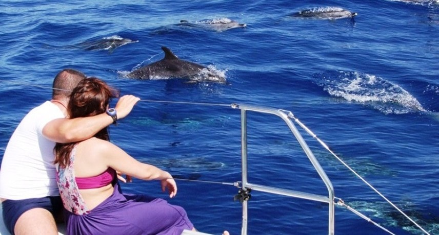 Dolphin & Whale Watching in Madeira Island