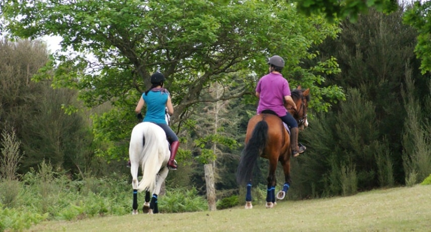 Horse Riding in Madeira Island